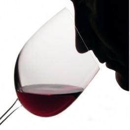 Curso Online Cata de vinos,Maridaje y Sumiller