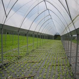 Mantenimiento y manejo de invernaderos. Horticultura y floricultura